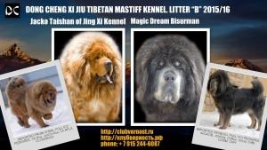 тибесткий мастиф, щенки тибетского мастифа, питомник тибетских мастифов, мастиф, тибет,