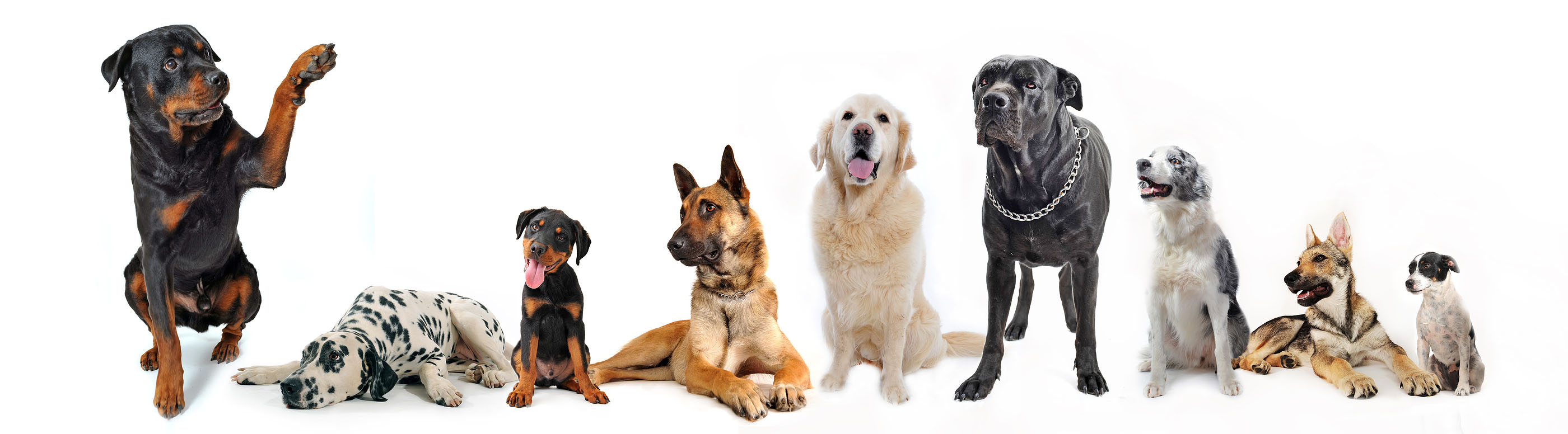 group-of-dogs1