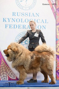 Jacko Taishan of Jing Xi Kennel
