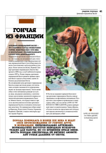 DOG_РР_бассет2