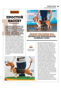 DOG_РР_бассет4