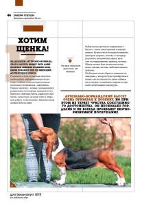 DOG_РР_бассет5